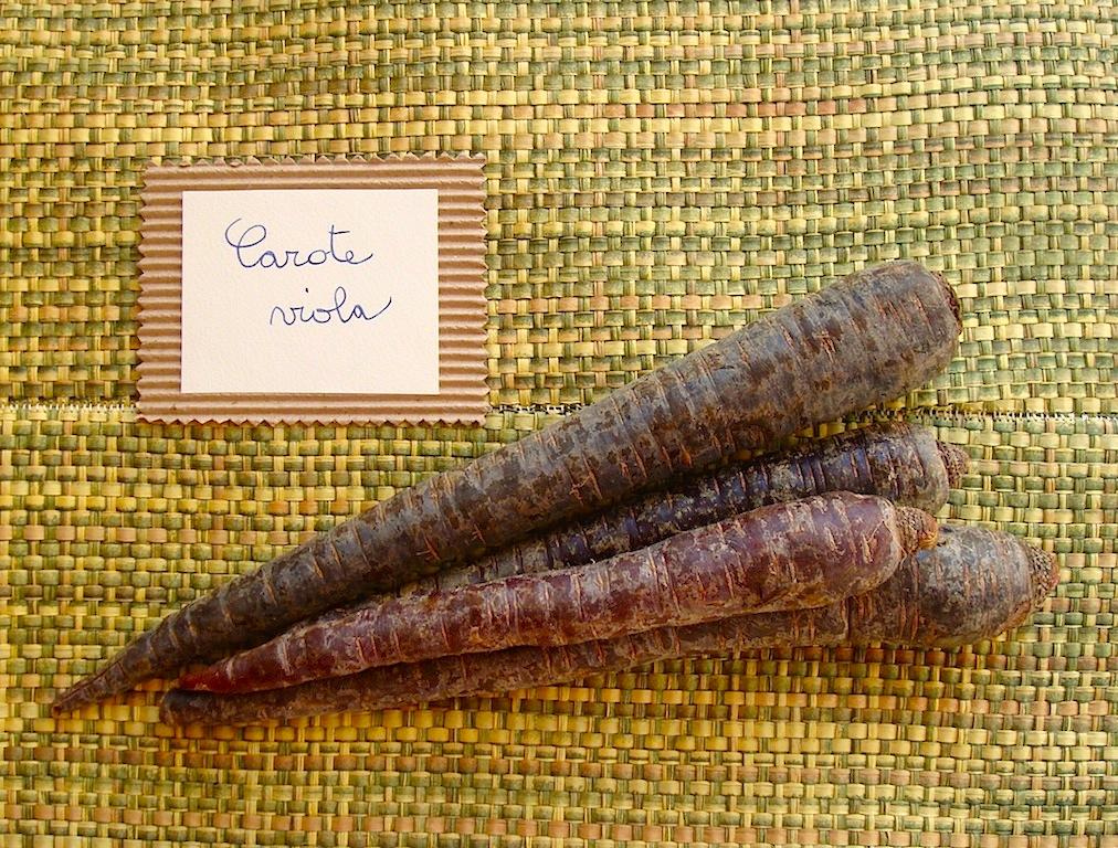 La carota viola, concentrato di salute